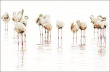 / Фламинго