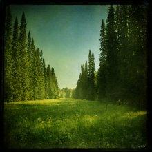 """Без названия / экспериментальное природоведение продолжение, Ломоносовский парк, вид от павильона Катальной горки, собственно сия """"просека"""" и есть место где была сама катальная горка...  приятного просмотра :)"""