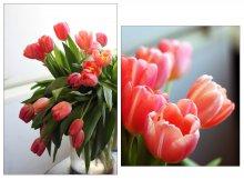 После 8 марта.... / Розовые тюльпаны-цветы весны.