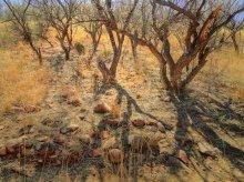 в лесных нетрах Патагонии / Патагония, Аризона