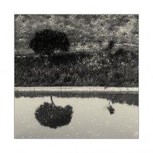 [:-.] / Отражения.Деревья.Графика.Май2012