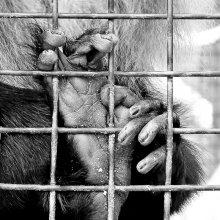 # / zoo