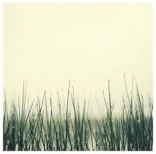Озерная / снято возле берега, поблизости от о.Селява