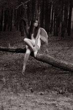 Без названия / ангел в лесу