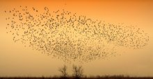 The Birds / ---