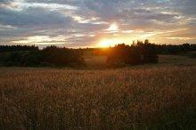 пшеница / ,,,,,,,,,,,,,