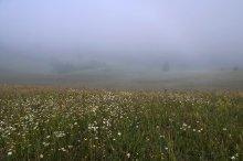 """Разнотравье Закарпатья...и туман... / Серия """"Карпаты"""".  Утро одного из дней выдалось туманное, тихое...Туман мягко окутал все вокруг, видно было от силы метров до 100...Поднимаясь вверх из Пилипца мы любовались этой красотой, домиками, которые туман мягко вуалировал, стожками, такими живописными изгородями...и морем цветов и трав...Среди цветов было много очень красивых паутинок с капельками росы.  Вот одна из них...  [img]http://img-fotki.yandex.ru/get/6402/84037677.c/0_9c115_e1303800_XXXL.jpg[/img]"""