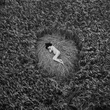 тихое место / Время от времени тема беременности так или иначе привлекает внимание. Место было найдено случайно, но потом именно эту тему было интересно обыграть в этих условиях. Очень уж перекликается поле вызревшей пшеницы с состоянием беременной женщины.