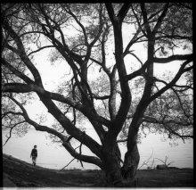 дерево / старые деревья могли бы многое рассказать...