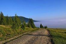 Дорога в утренний туман... / Самое начало дня, солнце только проснулось, высота над уровнем моря около 1200 метров, впереди как облако - туман...Красота Карпат завораживает...