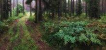 Папоротниковый лес / ....