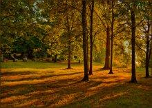 Лета уходящего лучи. / Последние лучи заходящего солнца в городском парке.