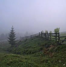Про елочку в тумане... / Закарпатье...Раннее туманное утро. Одинокая елочка и изгороди, которые растут...Удивительный, красивый и благодатный край....