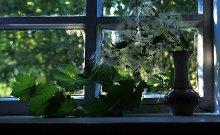 На окне / утром