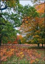 London. Richmond Park. Краски осени / Ричмонд Парк в пригороде Лондона - совершенно сказочное место, а осенью - просто рай! Парк занимает территорию в 955 гектаров и является крупнейшим парком Англии (а говорят, что и всей Европы). По нему свободно шатаются более 600 оленей. Парку уже 375 лет.