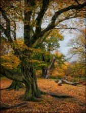 Richmond Park. Краски осени #11 / и снова Ричмонд-парк... бесконечно разный, фактурный, осенний, сказочный...