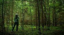 Глыбокі лес / пад Крупкамі