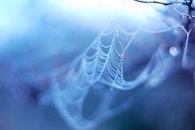 / паутинка в росе