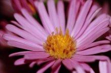 Тычинки - пестики / цветы