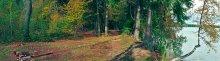 Лес / Просто первая пробная панорама. Тапками не кидайтесь :)
