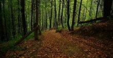 Тюдовский лес / Карпаты.Окрестности д. Тюдов