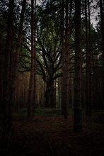 мёртвый дуб / те, кто выходил по нужде на бел-укр границе (Александровка) должны знать этот дуб:)