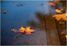 Осенний фрагмент / Осень, одним словом.