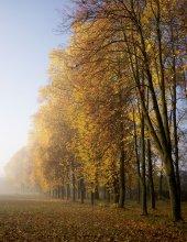 Серия :Утренний туман / ..........