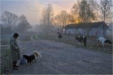 Пастух / Раннее утро. За околицей пастух собирает свое немногочисленное стадо