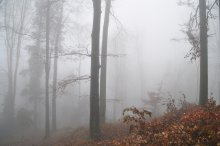 Something like a fog / ///////
