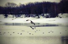 Коломенские зарисовки / Туманное зеркало, водные глади Штрихованы лёгкой игривою рябью Как лодочки чайки в зеркальном просторе Предвестники чувства...  ...............................весна придёт скоро...  Автор: Владимир Назаров http://n-volch.ya.ru/