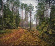 |   Лесное царство   | / жалко, что запах нельзя передать +4С, осенний запах мокрого леса