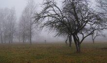 Утро.Туман. / ...............