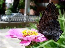 как сложно придумать название к портрету бабочки!!! / всё, что могу сказать - в ФШ тока рамка и малюсенькая подпись... хочу знать мнение!!!!