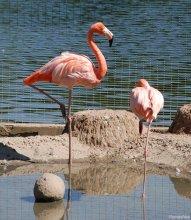 Смена караула в царстве розовых птиц... / приятного просмотра...