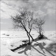 / Зима Финский залив На светлом фоне