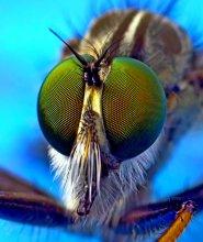 Зелёные глаза хищника / Зелёные глаза хищника