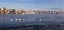 Про лебедей...... / В теплые края.......   в Стокгольме  -15...из за быстрого течения вода не замерзает....