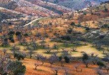 Фисташковый рай. / Турция. Провинция Газиантеп.