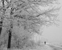 По столбовой. / Зимой погода бывает разной,самая красивая,когда все покрывается инеем.