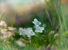 / цветы в траве