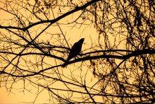 На закате / В ботаническом саду