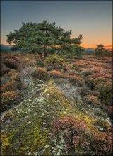 Dorset. Pool. Shell Bay II / Осенний закат в болотах береговой линии Shell Bay (южная Англия). Потрясающее сочетание мхов, лишайников, кустарников создает неповторимый колорит этих удивительных мест.