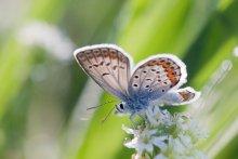/ Утренняя бабочка