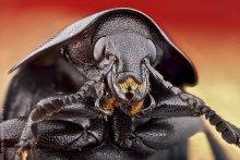 Жук / Макроснимок черного жука.