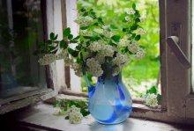 На старом окне / с белыми цветами