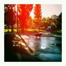 черный пес утреннего города / ......