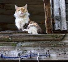 Кошка на окошке / Хозяйка сельского дома