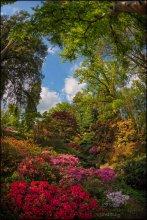 """Exbury Gardens. Landscape / Exbury Gardens - один из лучших """"диких"""" садов Англии... Сотня гектаров рододендронов, азалий и камелий в самых немыслимых сочетаниях...  Немного информации можно почерпнуть здесь (не моё): http://sweet-live.ru/post102594229/ Официальный сайт: http://www.exbury.co.uk/website/"""