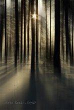 Зимний лес / Приятного просмотра